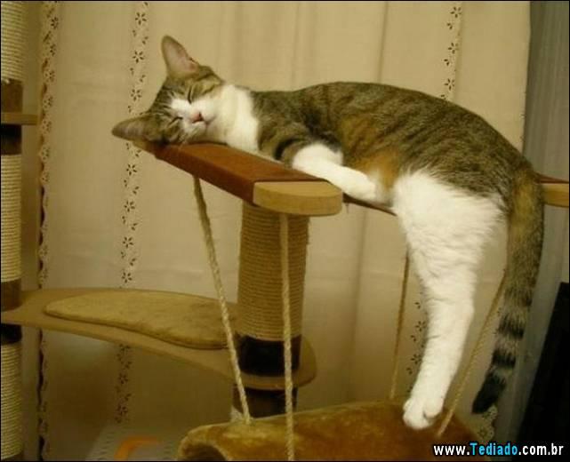 selo-dorminhoco-gato-13
