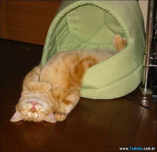 selo-dorminhoco-gato-14