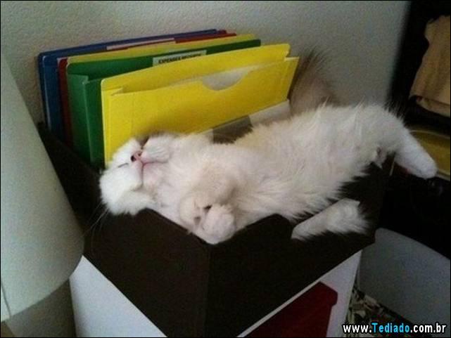 selo-dorminhoco-gato-15