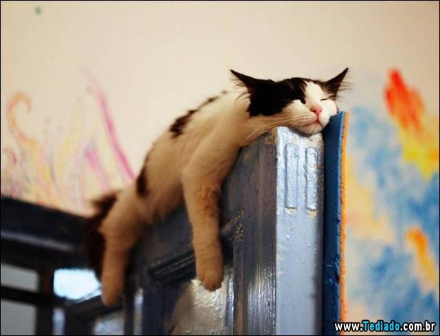 selo-dorminhoco-gato-16