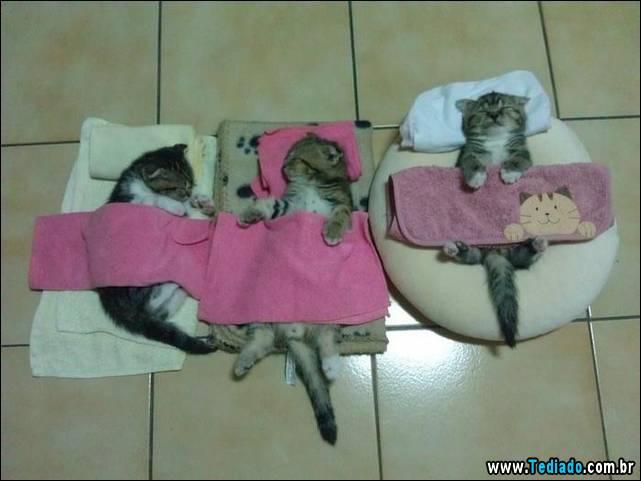 selo-dorminhoco-gato-17