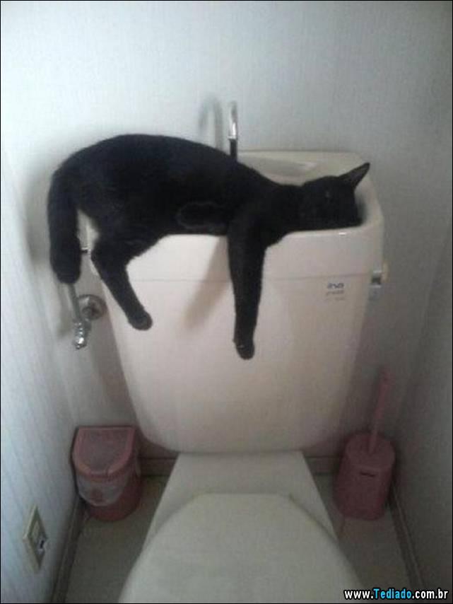 selo-dorminhoco-gato-18