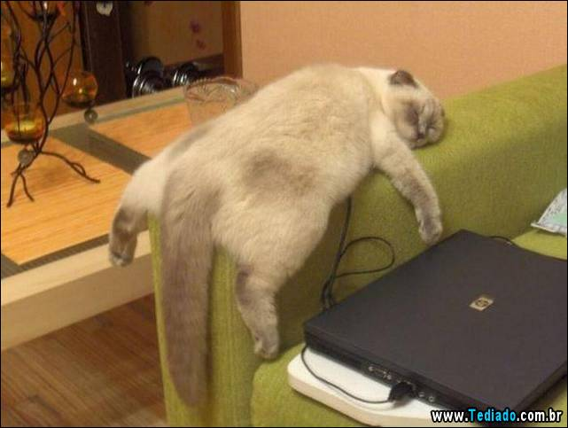 selo-dorminhoco-gato-19