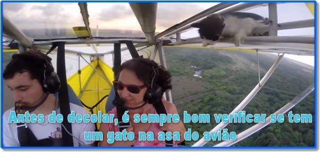 gatinho-01