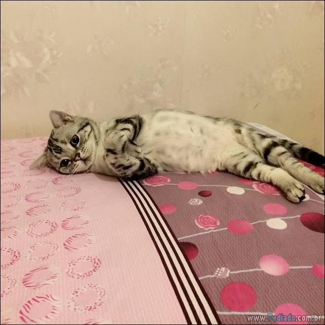 gato-triste-da-internet-01