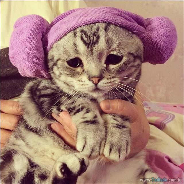 gato-triste-da-internet-02