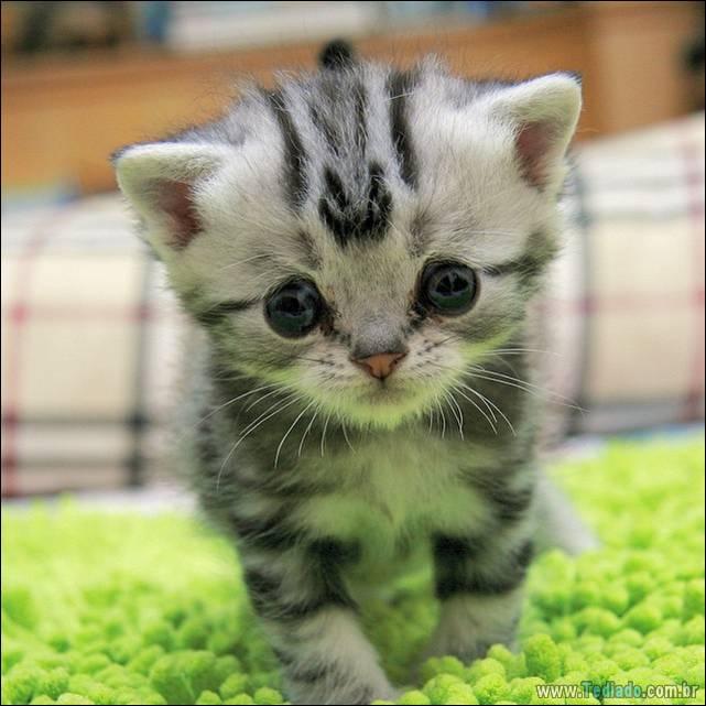 gato-triste-da-internet-03