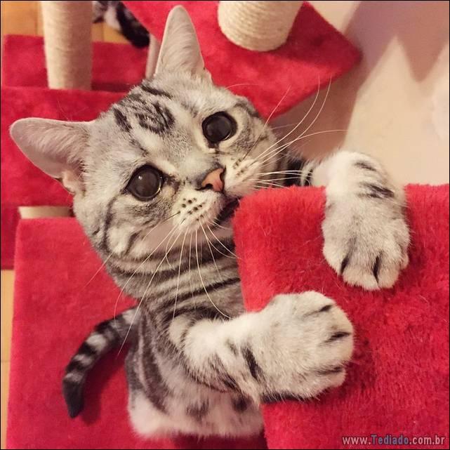 gato-triste-da-internet-04