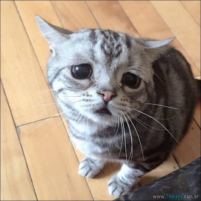 gato-triste-da-internet-05