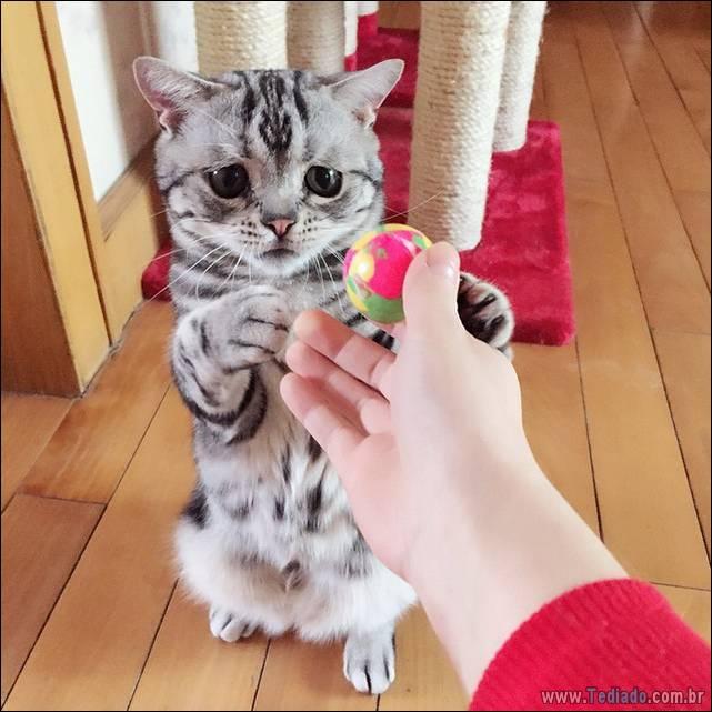 gato-triste-da-internet-06