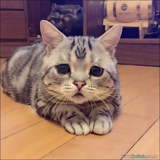 gato-triste-da-internet-07