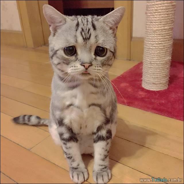 gato-triste-da-internet-09