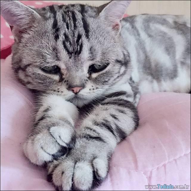 gato-triste-da-internet-10