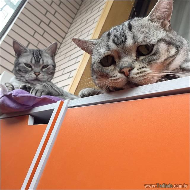 gato-triste-da-internet-11