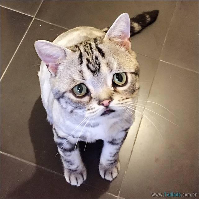 gato-triste-da-internet-12