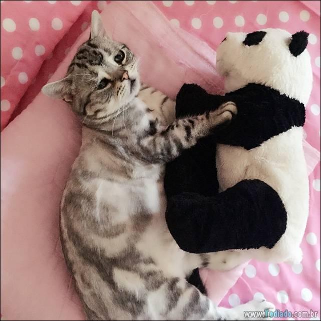 gato-triste-da-internet-13