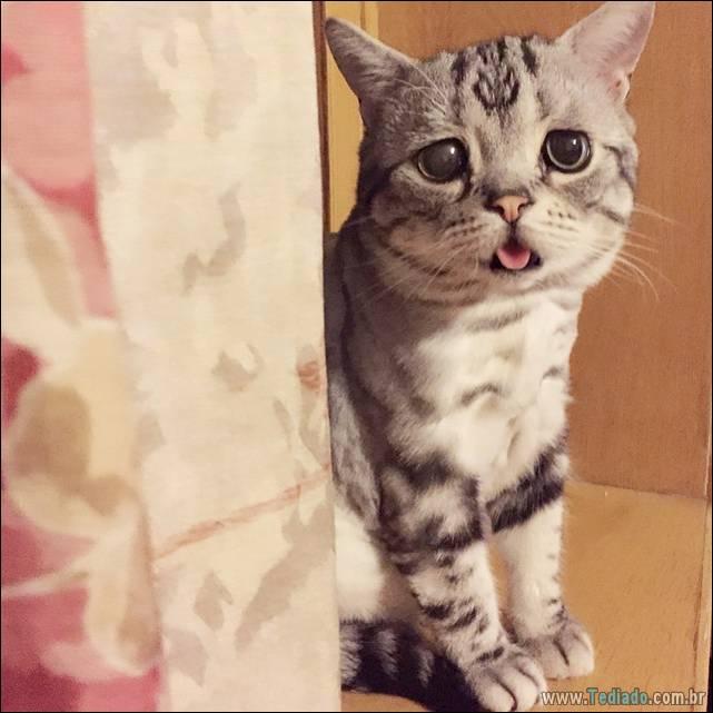 gato-triste-da-internet-14