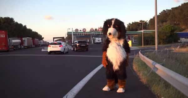 Pegadinha: Cachorro perturbar as pessoas 3