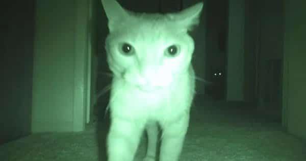 O que fazem os gatos à noite 3