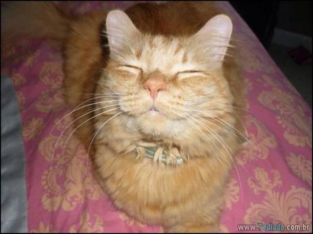 gatos-sorridentes-02