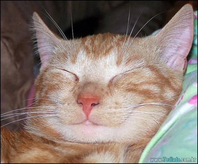 gatos-sorridentes-04