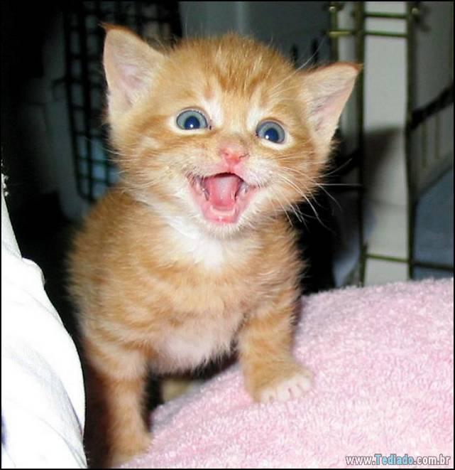 gatos-sorridentes-05