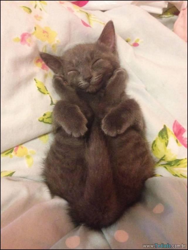 gatos-sorridentes-07