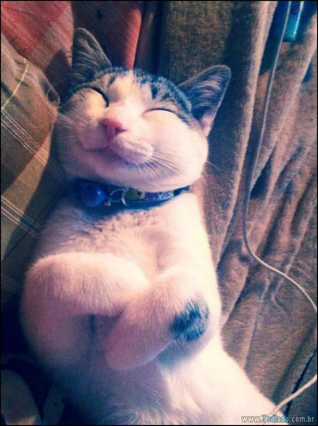 gatos-sorridentes-10