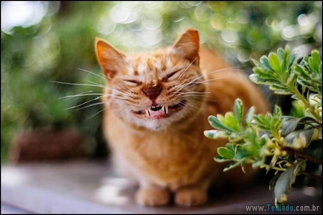 gatos-sorridentes-11