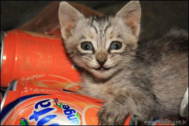 gatos-sorridentes-12