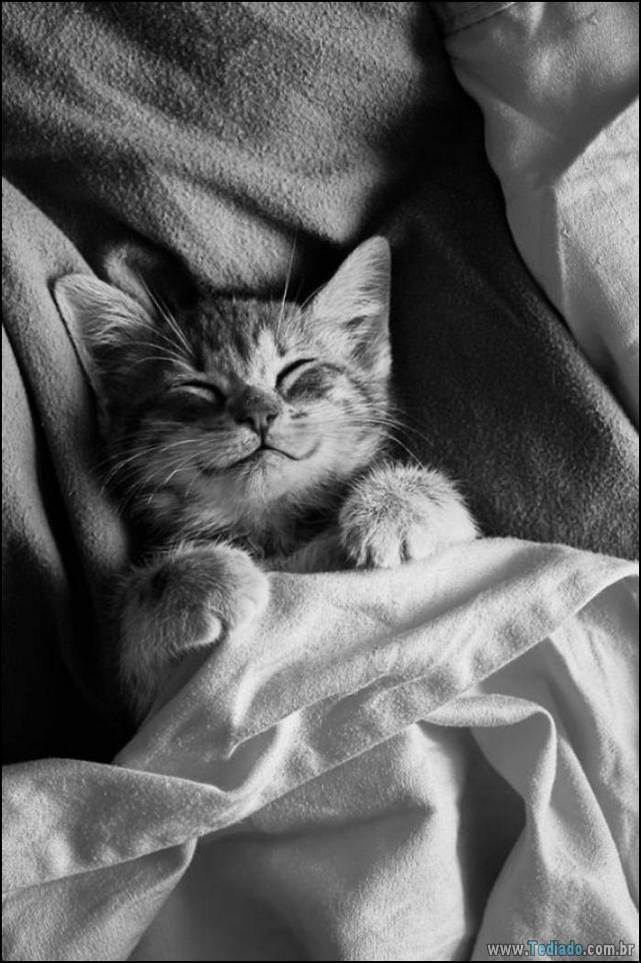 gatos-sorridentes-13