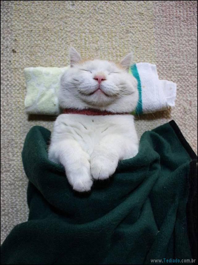 gatos-sorridentes-14