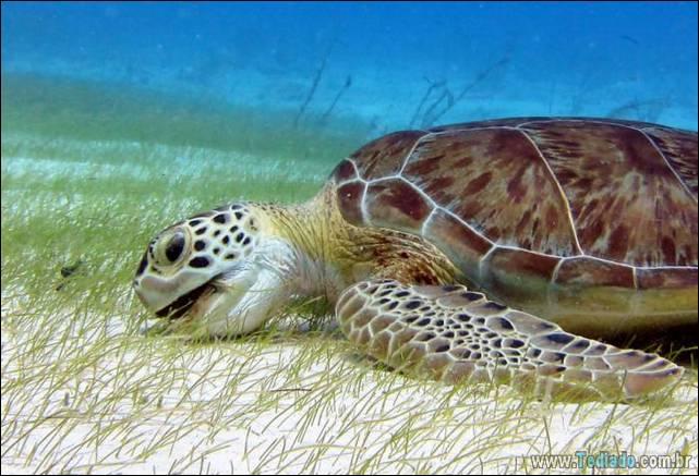 belas-fotografias-subaquaticas-02