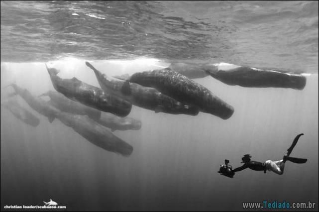 belas-fotografias-subaquaticas-03