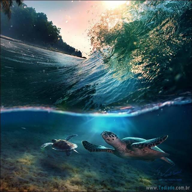belas-fotografias-subaquaticas-04