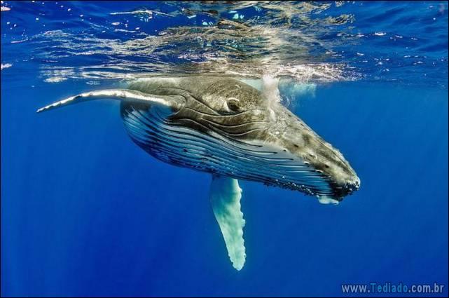belas-fotografias-subaquaticas-05