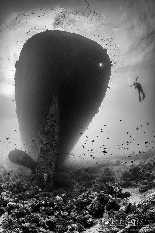 belas-fotografias-subaquaticas-06