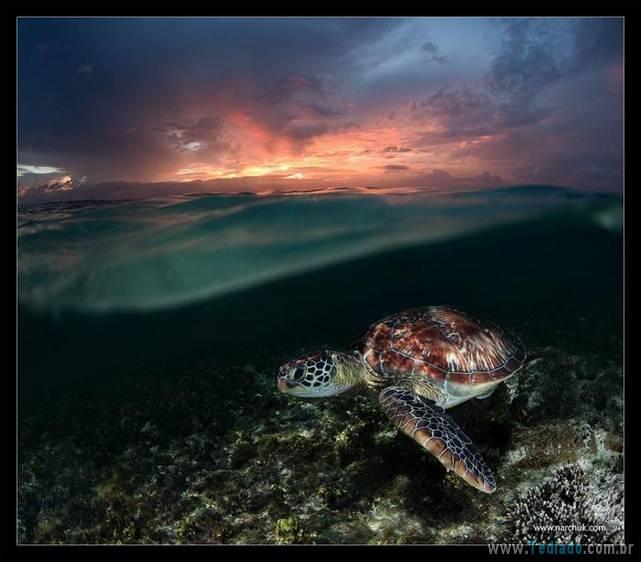 belas-fotografias-subaquaticas-07