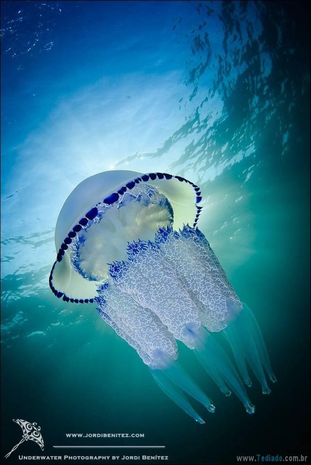 belas-fotografias-subaquaticas-08