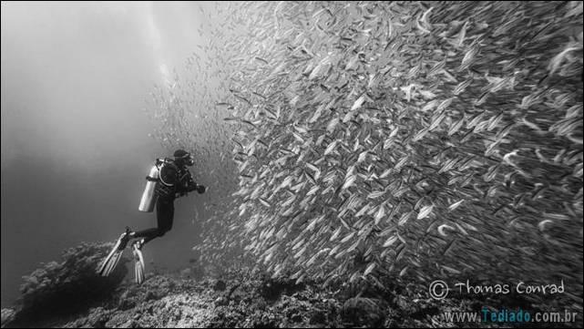 belas-fotografias-subaquaticas-10