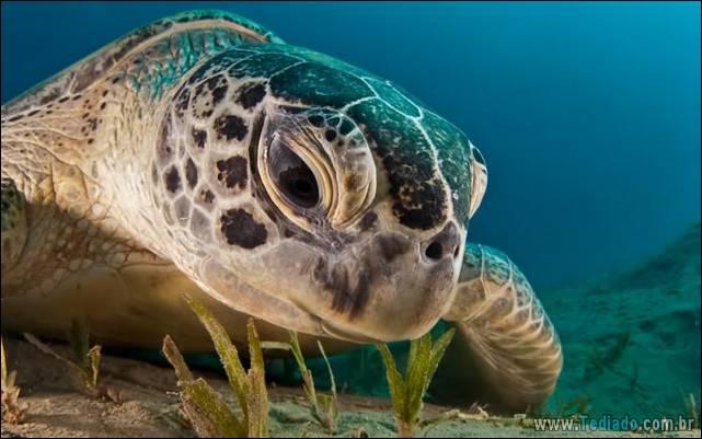 belas-fotografias-subaquaticas-14