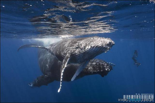 belas-fotografias-subaquaticas-19