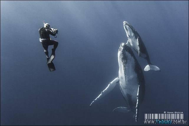 belas-fotografias-subaquaticas-20