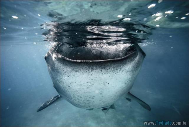 belas-fotografias-subaquaticas-23