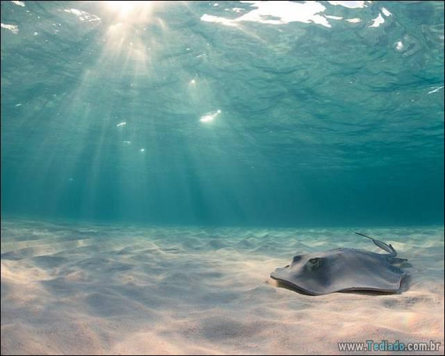 belas-fotografias-subaquaticas-24