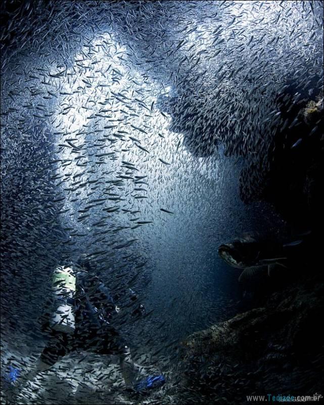 belas-fotografias-subaquaticas-25