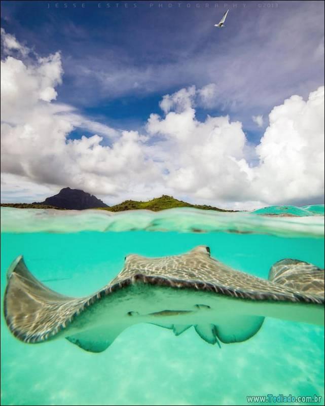 belas-fotografias-subaquaticas-29
