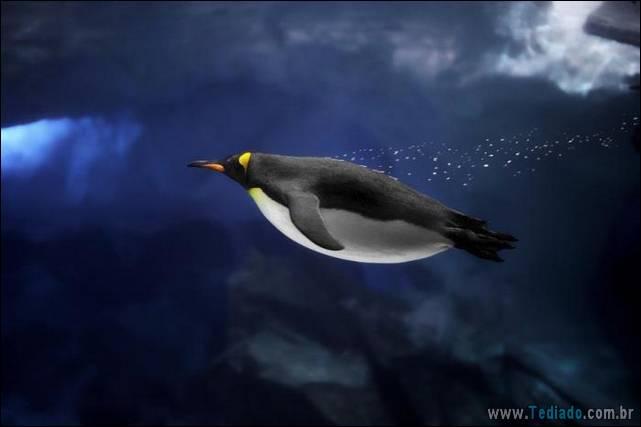 belas-fotografias-subaquaticas-30