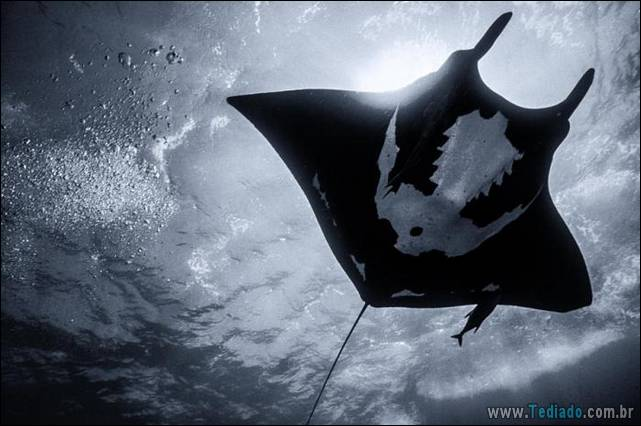 belas-fotografias-subaquaticas-34