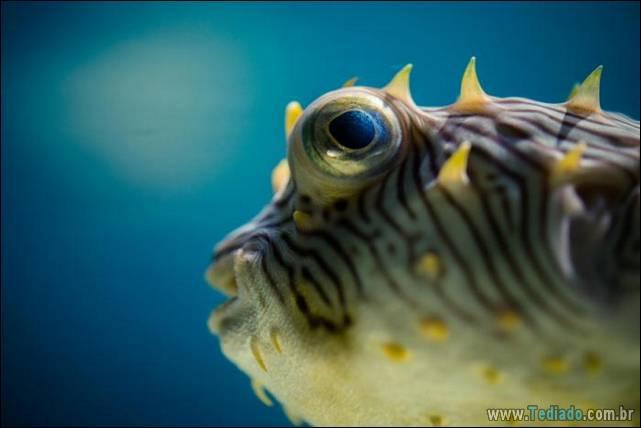 belas-fotografias-subaquaticas-35